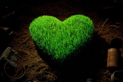 Grow Love in Your Garden Today